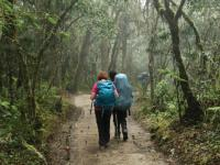 Trekking the lower forest en-route to Kilimanjaro |  <i>Kyle Super</i>