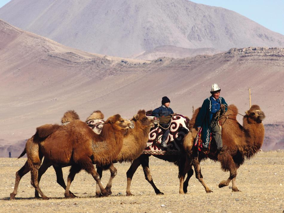 A traditional Mongolian camel herder -  Photo: Campbell Bridge