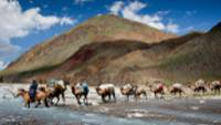 Camel crossing, Mongolia |  <i>Cam Cope</i>