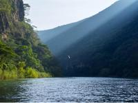 A lone bird flies in Sumidero Canyon