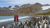 King Penguins on South Georgia |  <i>Peter Walton</i>
