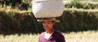 Local woman carrying farmed crops on her head   Ian Williams