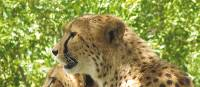 See cheetah and other wildlife in Kruger National Park on a South Africa safari
