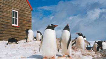 Prolific wildlife and amazing history can both be discovered in the Antarctic Peninsula | Sue Werner