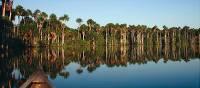 Cruising along the Amazon is the ideal way to spot wildlife   Bert Lozey