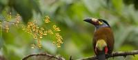 Bird in Bellavista Parc on our Ecuador Experience   Xavier Amigo